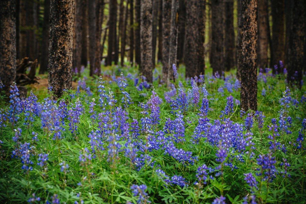 Картинки фото лесные цветы