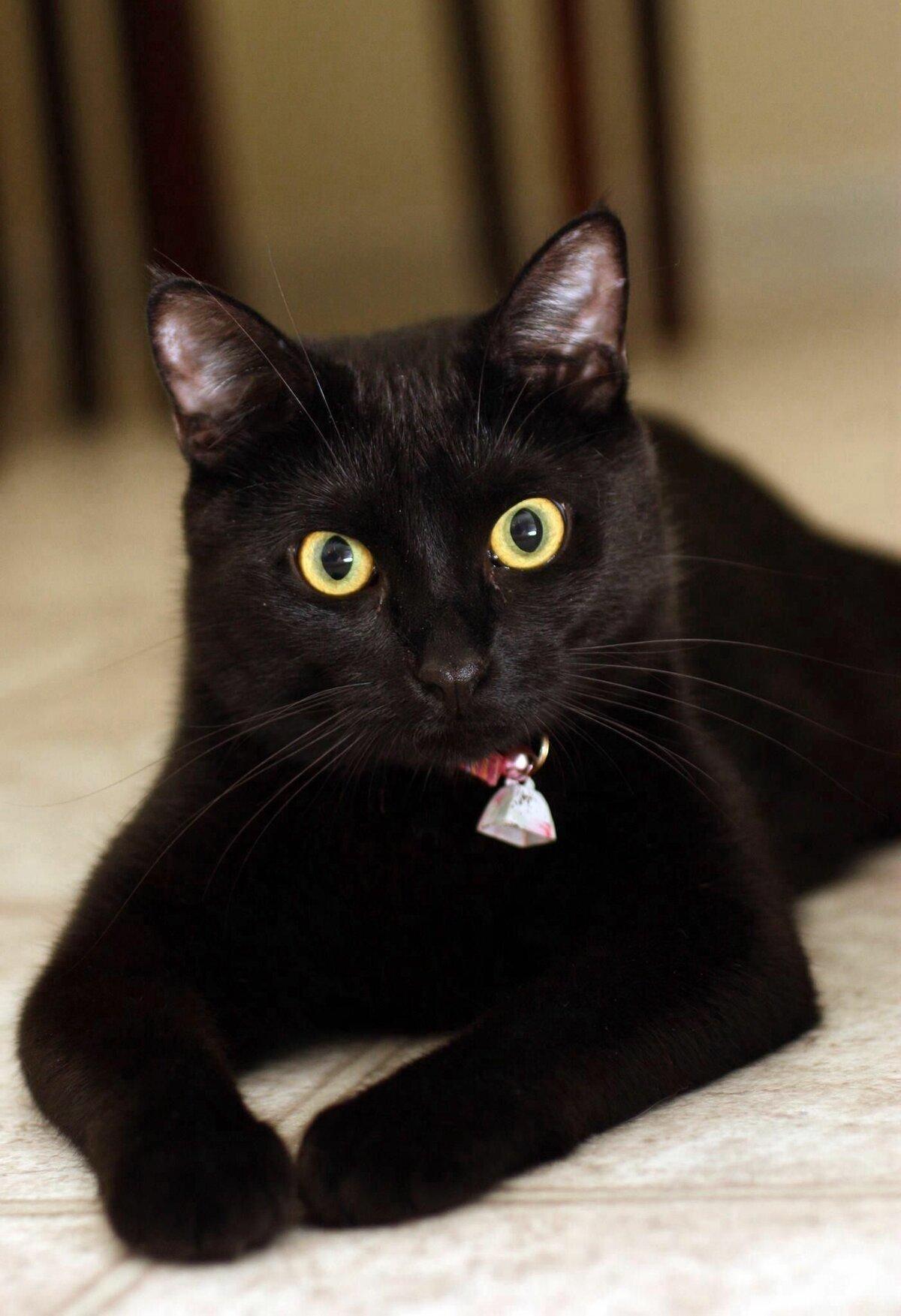 хотим, картинки кошек черного окраса можете детально сравнить