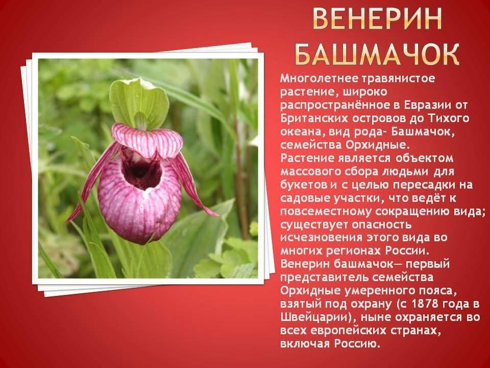 редкие цветы из красной книги россии клипарты