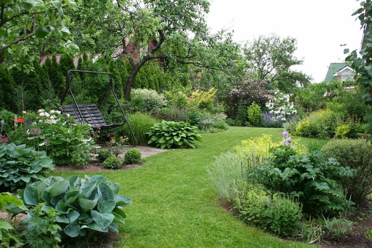 сотка садовые