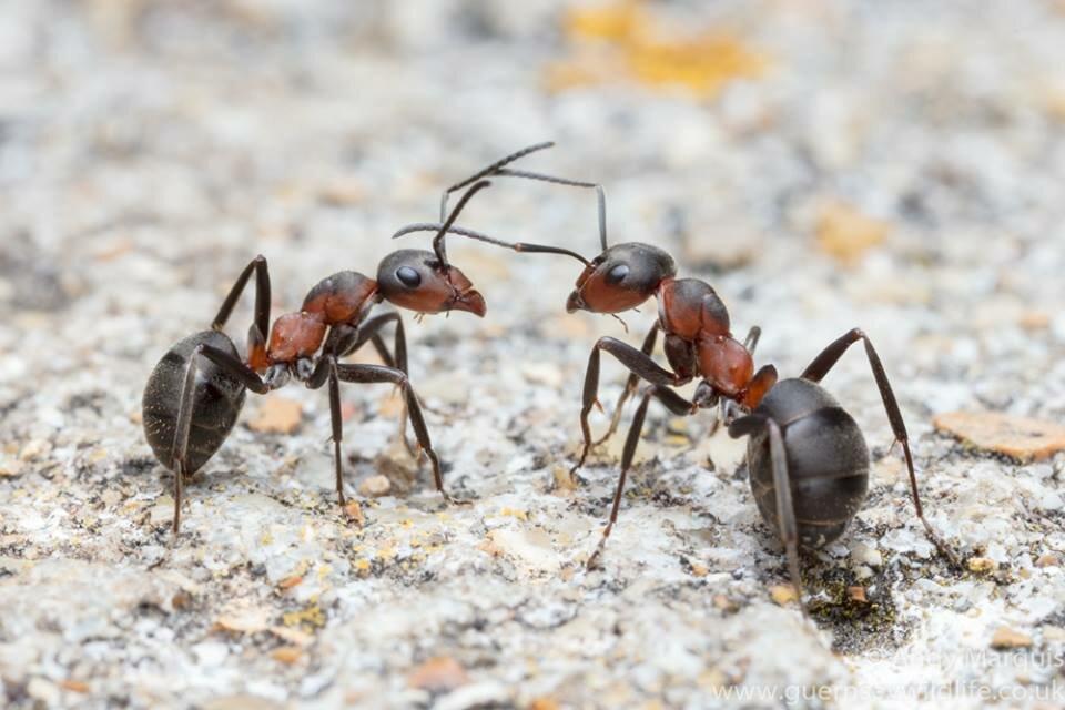 виды муравьев на картинке его элементом