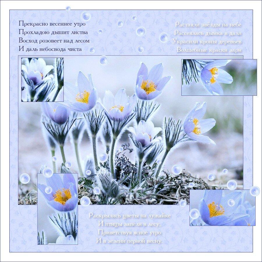 Днем, открытки с весенним добрым утром со стихами