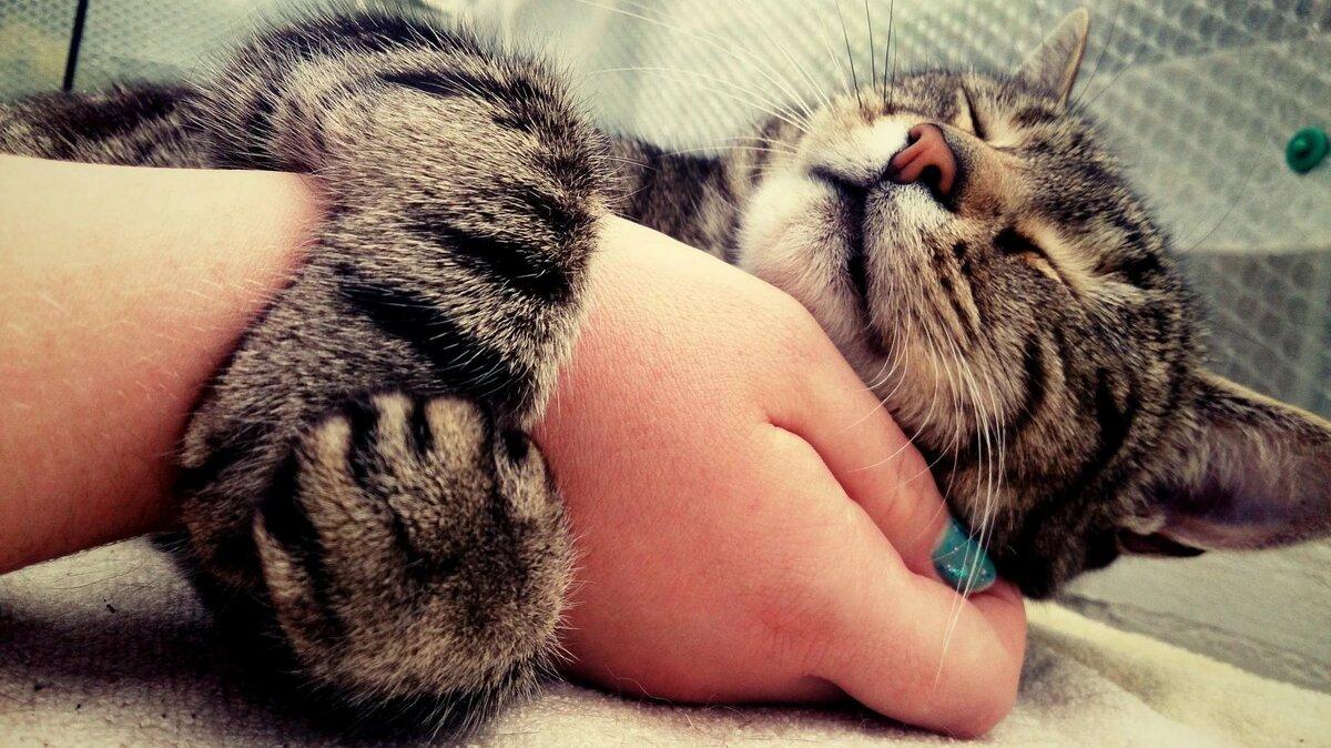 фотографию, сможете спящий котенок фото на руках становится ярче легче