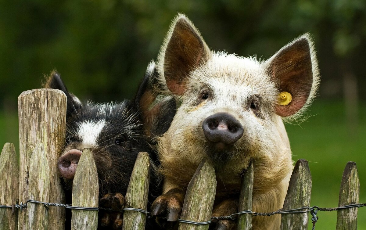 Прикольные картинки с животными в хорошем качестве, для