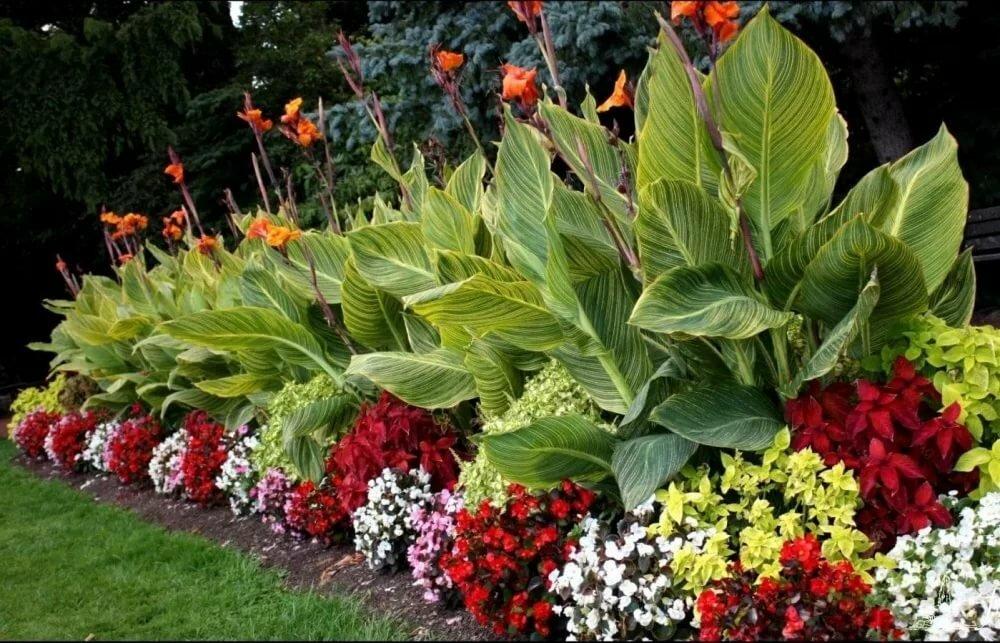 Садить растения картинки с названиями