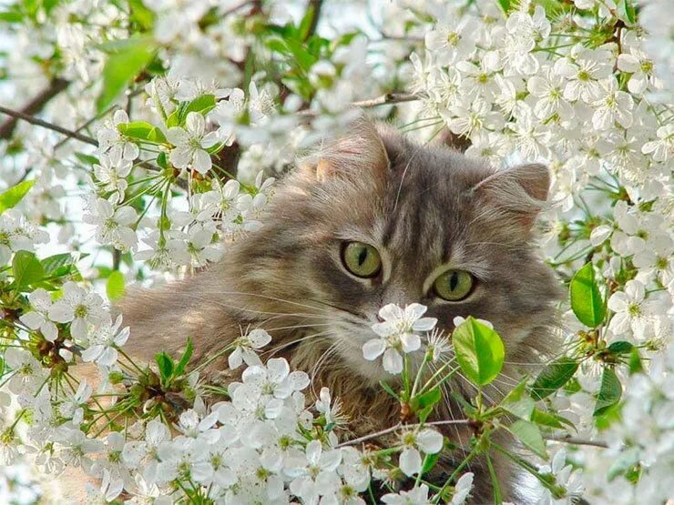 Открытка кот весна, поздравлением рождеством