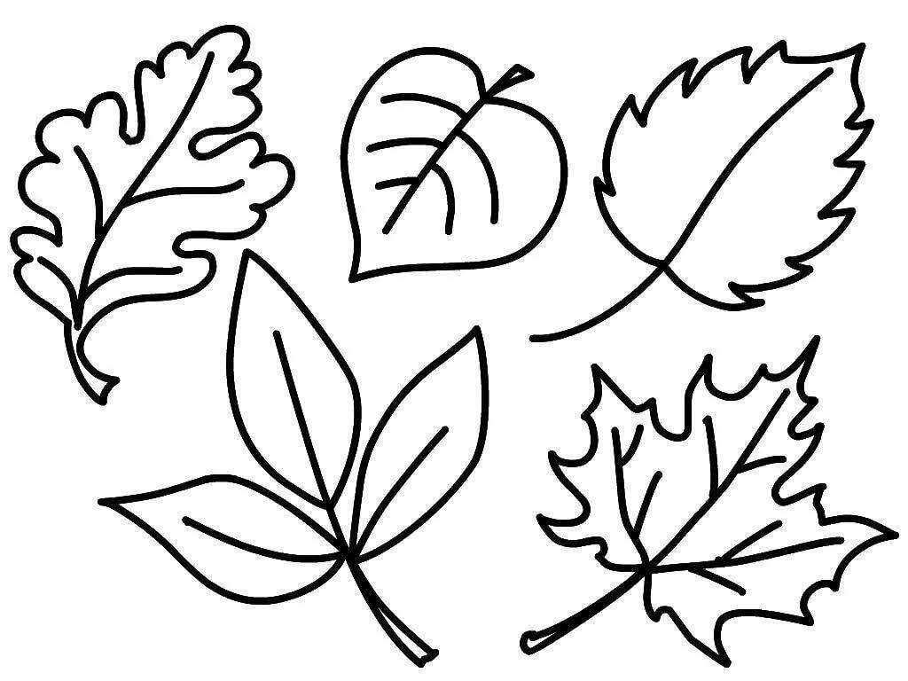 Картинки листья деревьев раскраска для детей