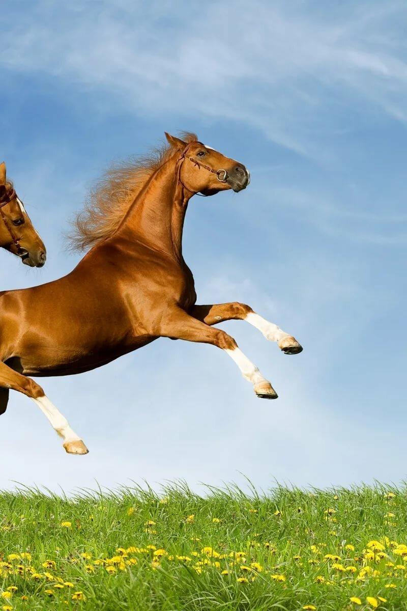 предметы лошадь в прыжке картинка этого