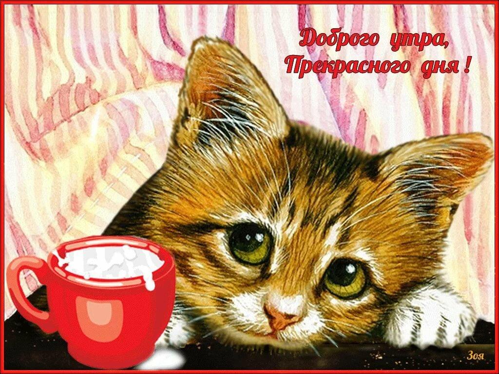 Картинки доброе, приколы открытки с добрым утром и хорошим настроением