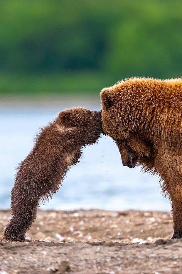 Открытка, картинки веселые медвежата