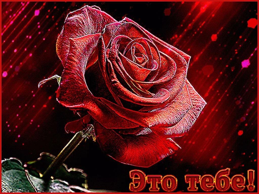 Открытках, розы анимированные открытки
