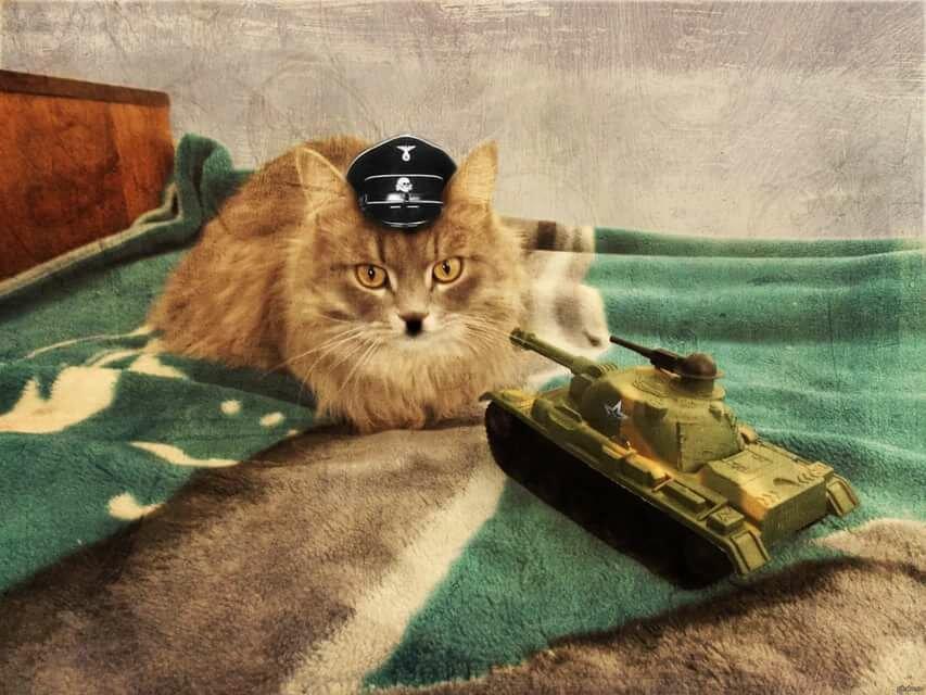 Кот танкист в картинках