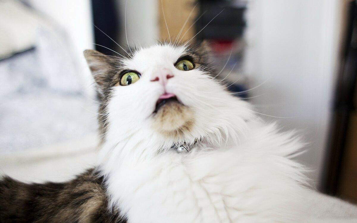 Самая смешная картинка кота, открытка
