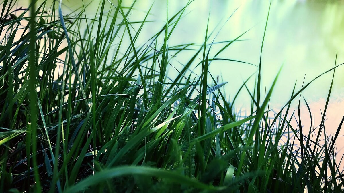 Красивые картинки с травой
