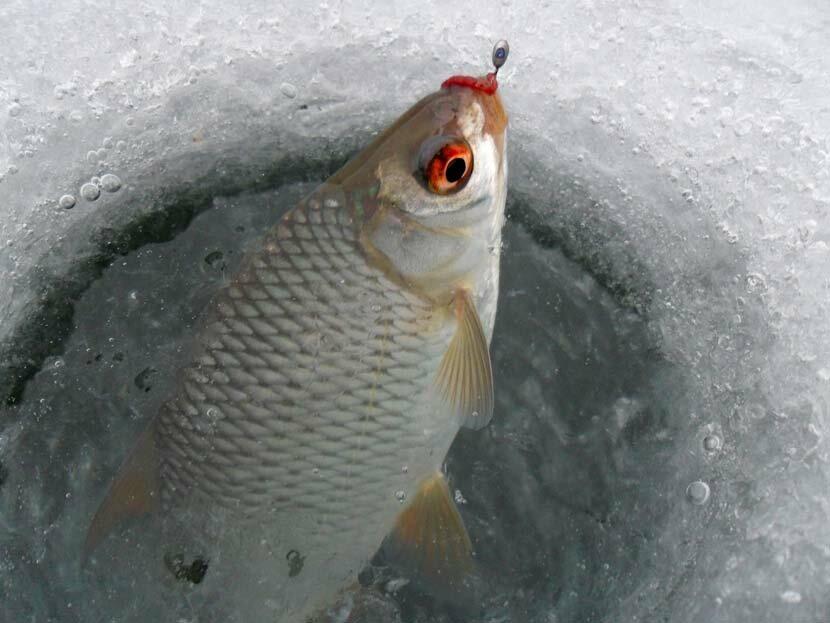 Рыбалка зимняя плотва