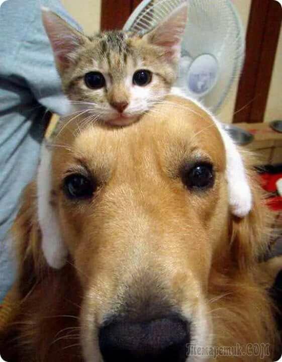 Картинка, прикольные фото собаки кошки