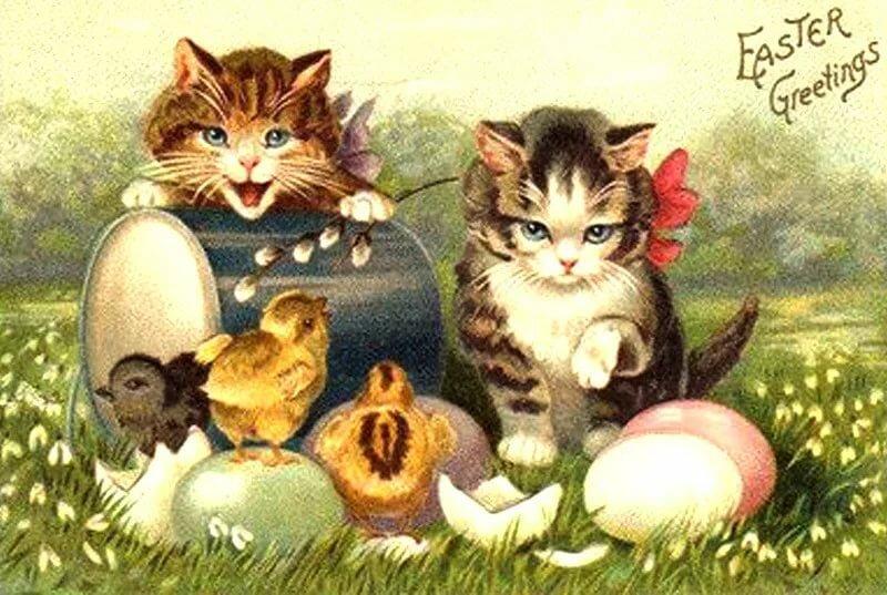 Презентации, открытки кроликом котом