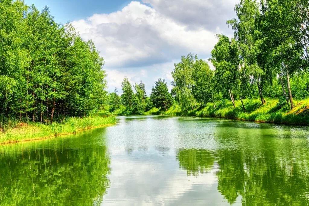 Картинка с рекой и с лесом