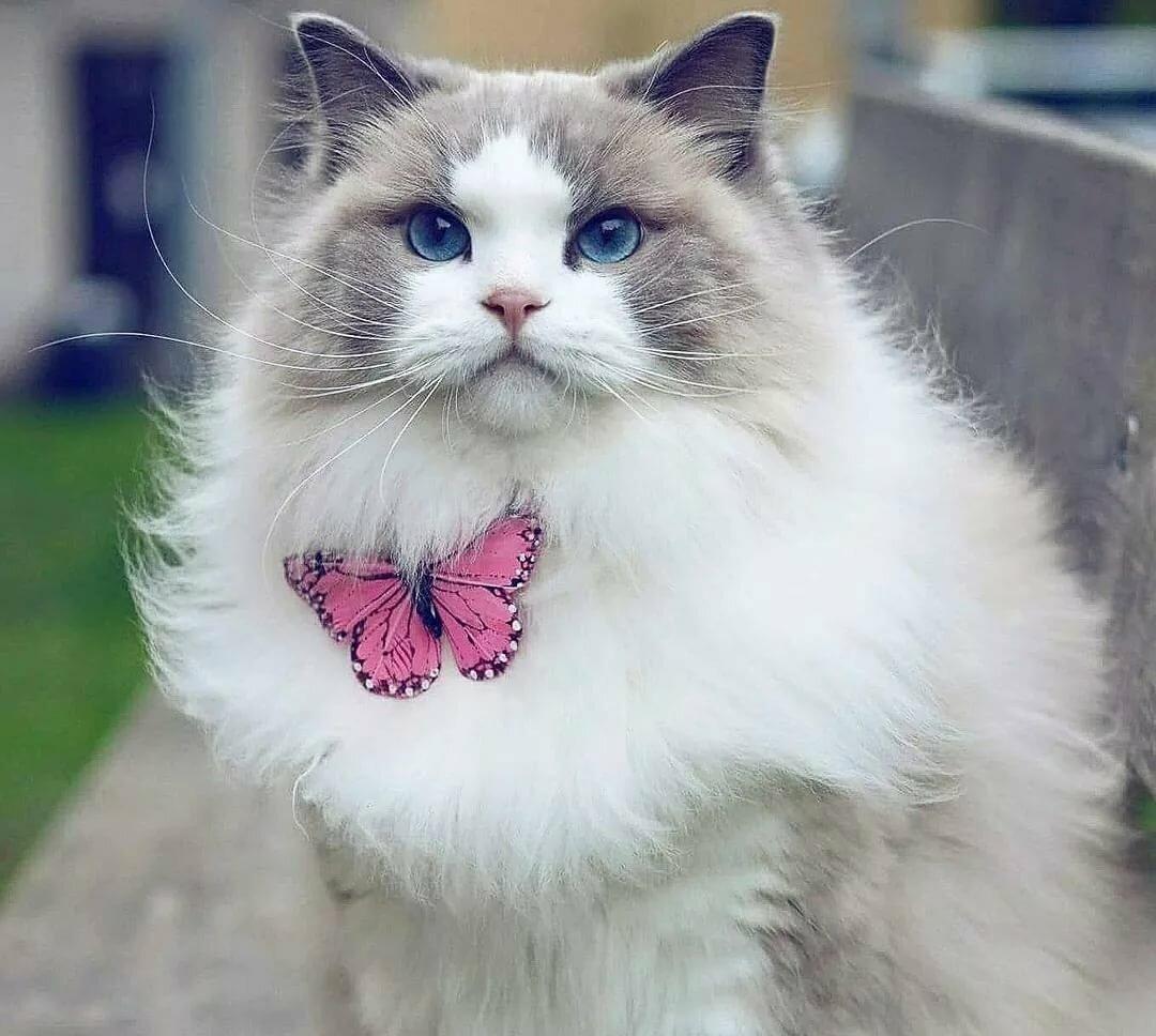 Самый красивые коты в мире