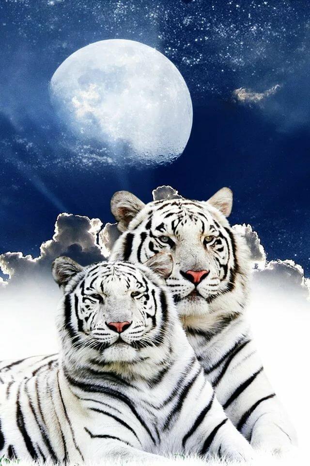 Картинки белого тигра анимация