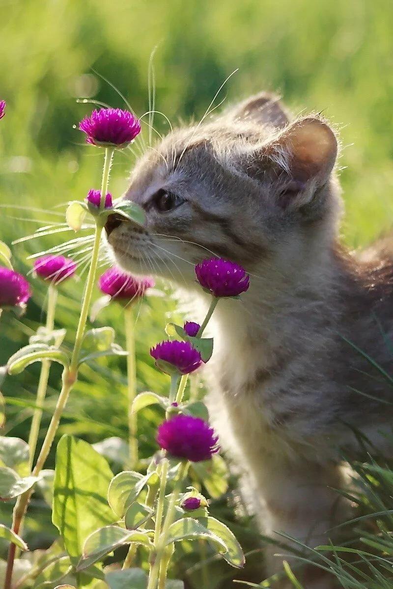 Красивые картинки смешные животные с цветами