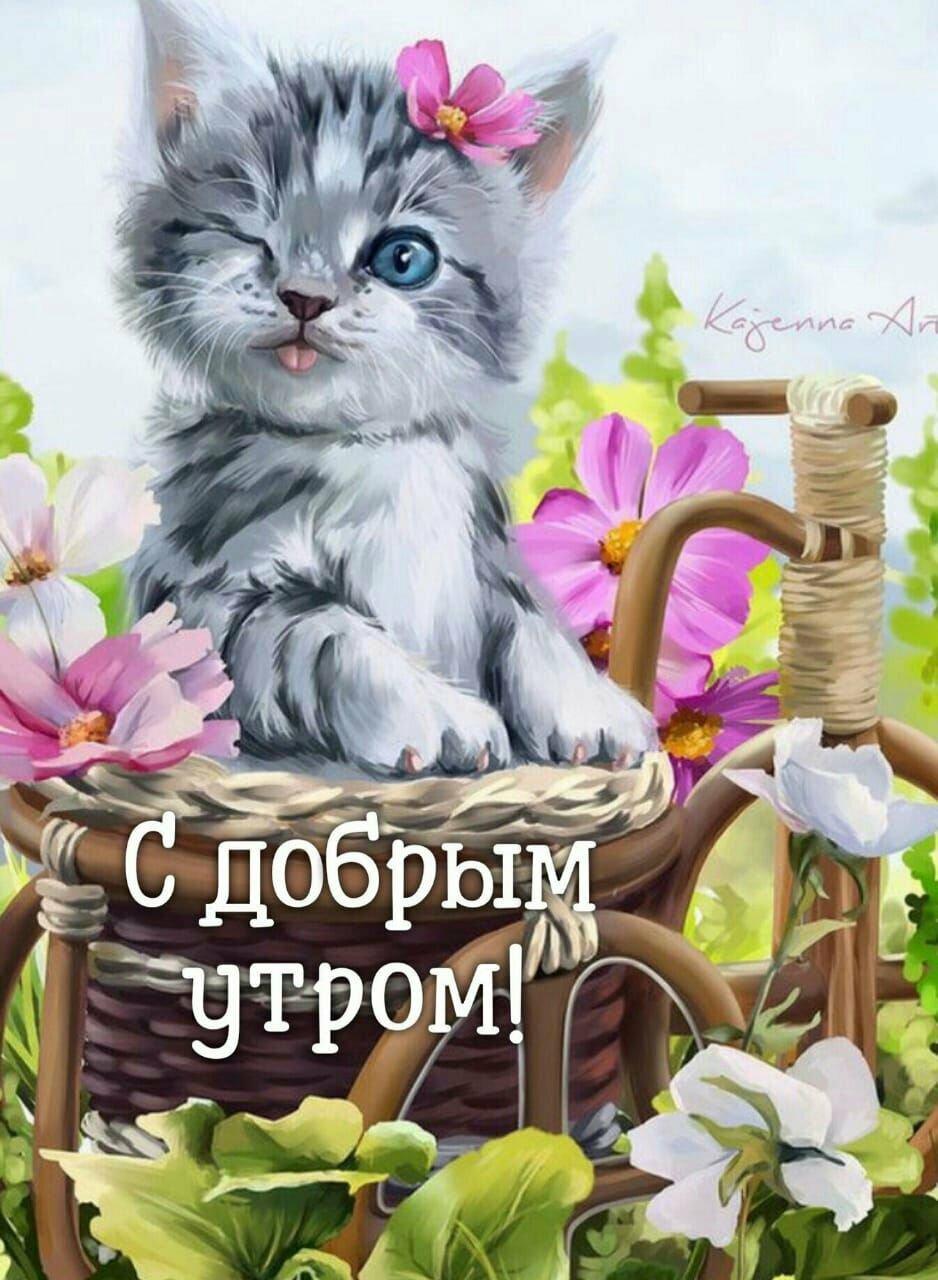 Яндекс найди пожалуйста красивые открытки с красивыми надписями, смешная курица