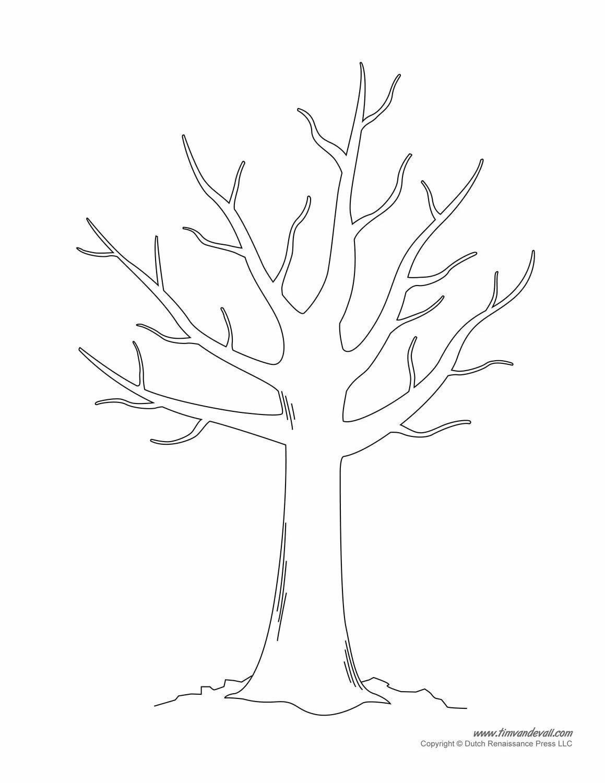 ствол кленового дерева картинки