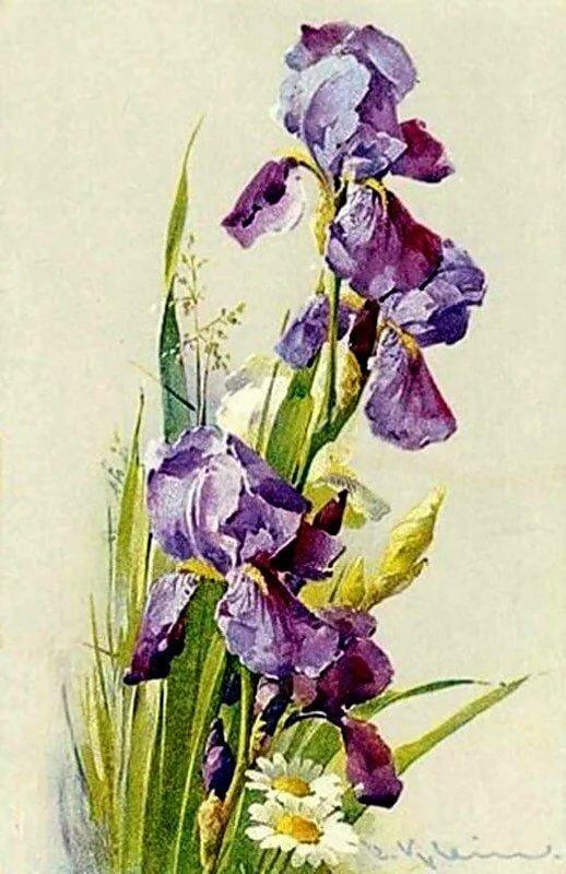 Поздравлением днем, открытка с цветами ирис