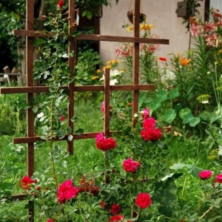 термальный опоры для плетистых роз фотографии цветка, переданная при