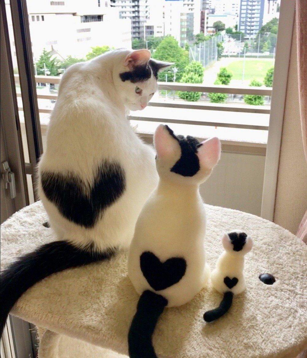Картинки, доброе утро прикольные картинки с котами