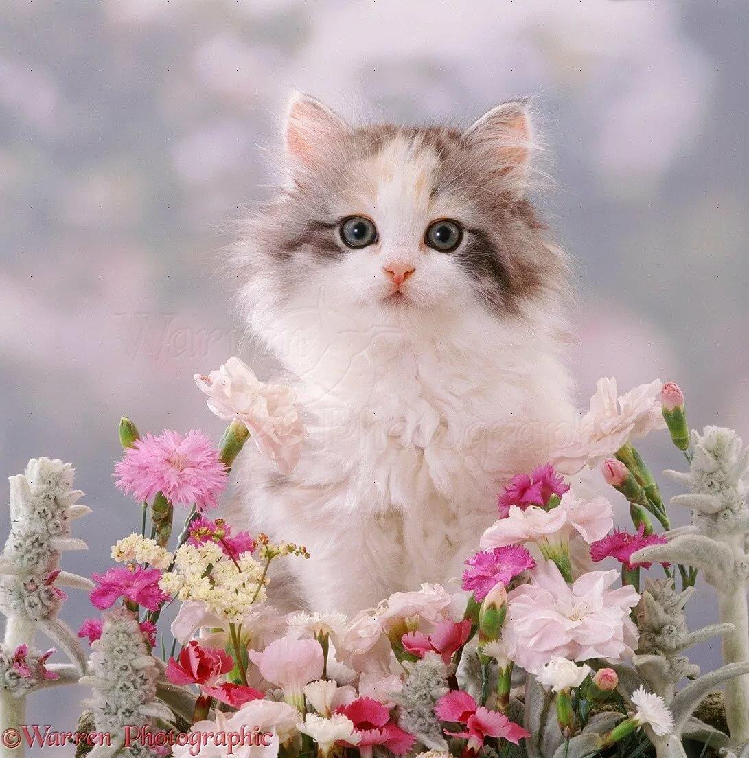Картинки котята нежные