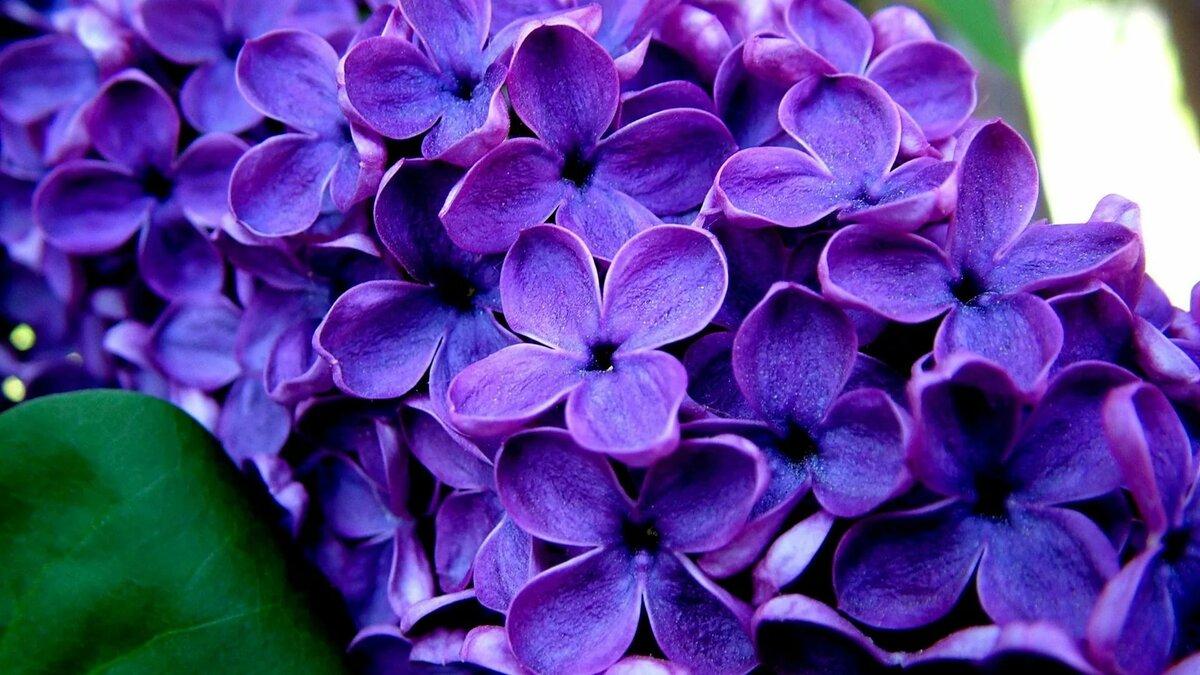 Картинки на телефон цветы