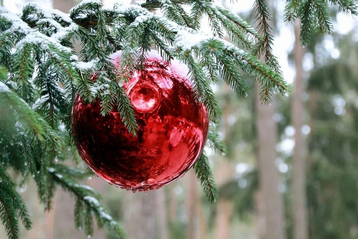 Зимние елочки картинки новогодние