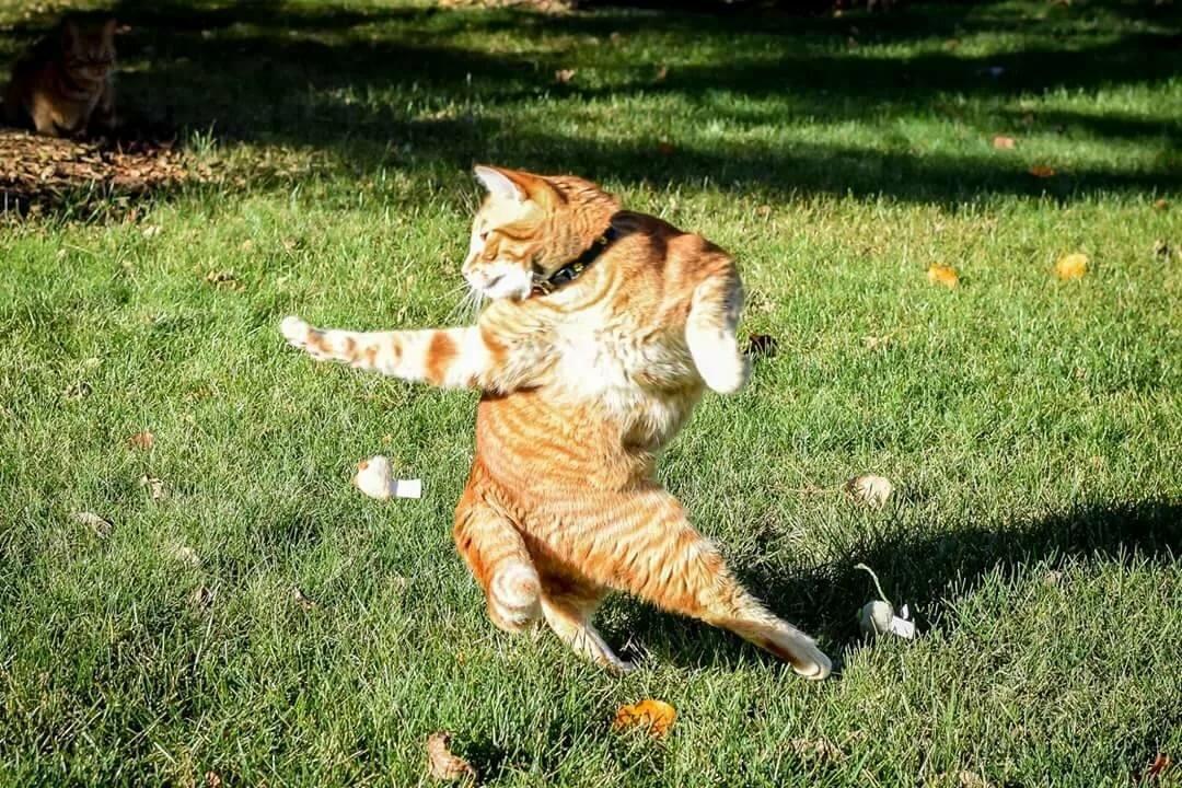 Открыток для, приколы картинки кошки