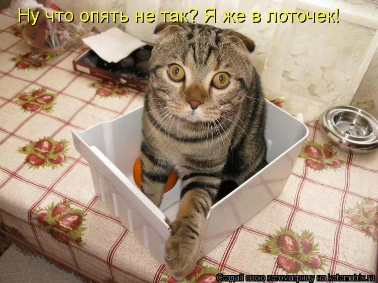 Картинки с кошками с надписями смешные новые