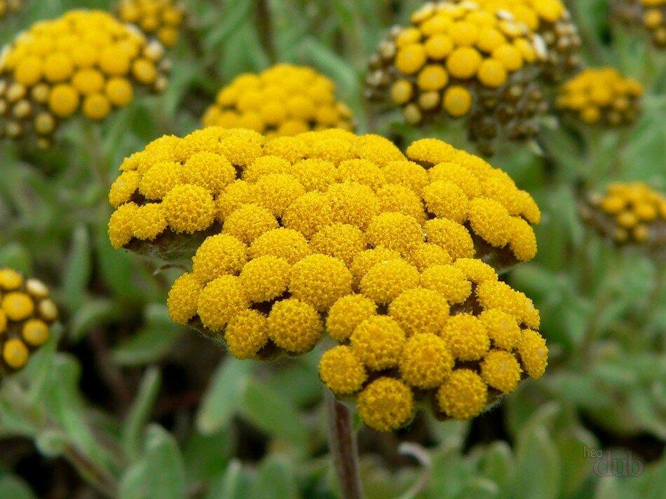 Объемным, картинки лекарственные растения