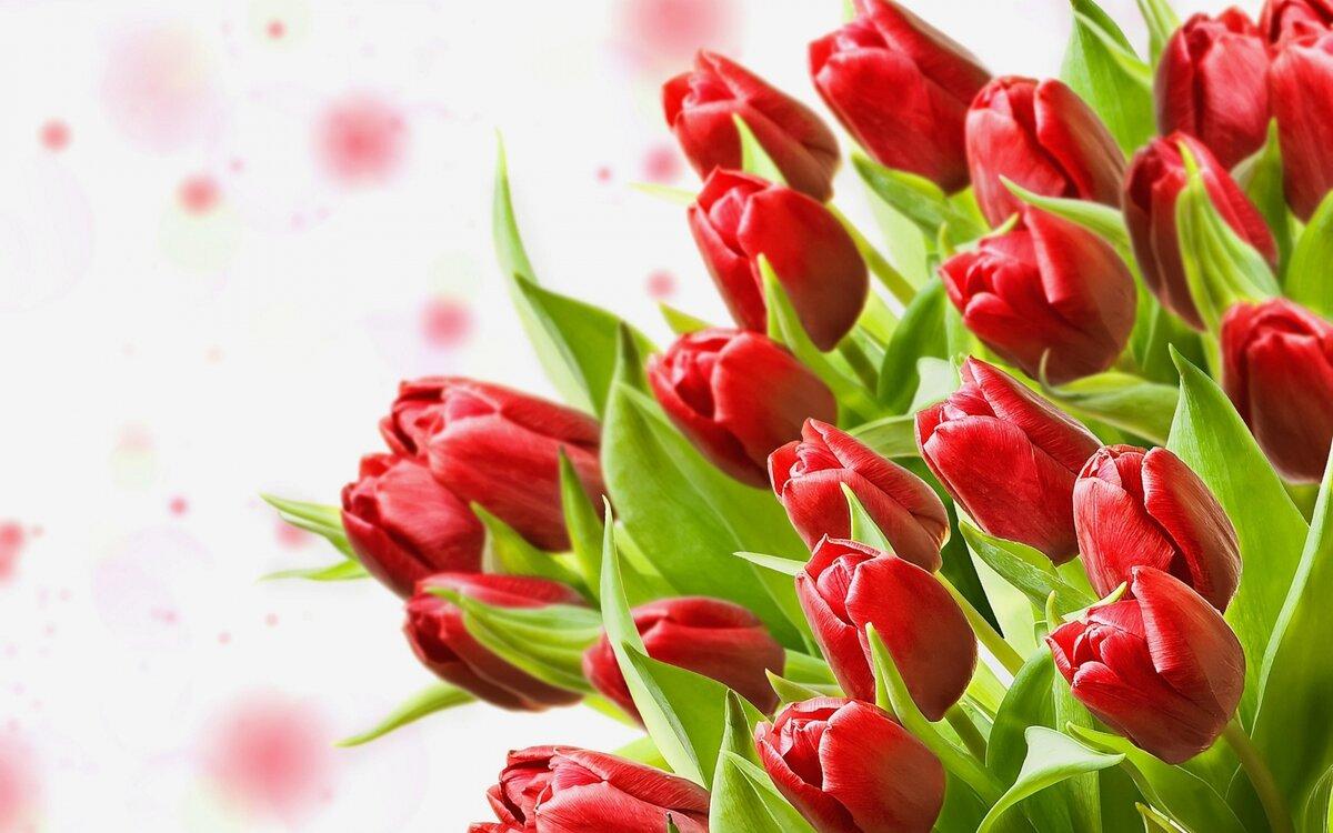 Картинка с тюльпанами на рабочий стол, утро