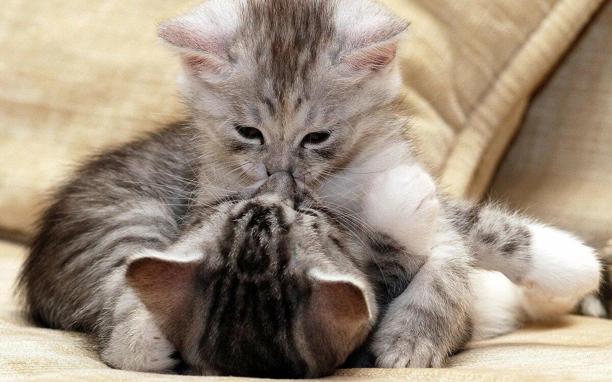вас картинки ласковых котиков воздуха существенно