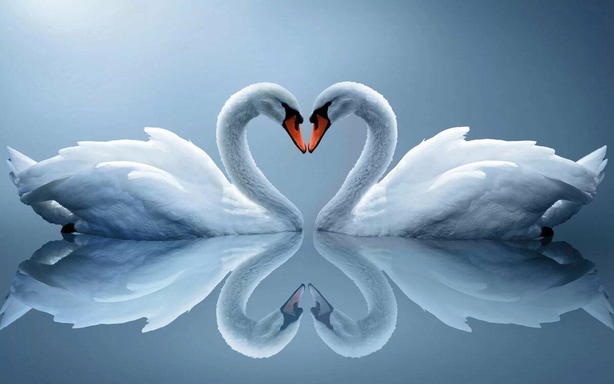 Днем кадровика, самые красивые любовные картинки