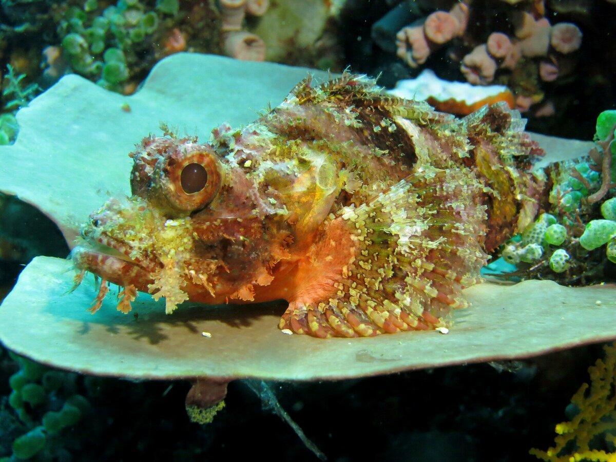 Картинка рыбы камень