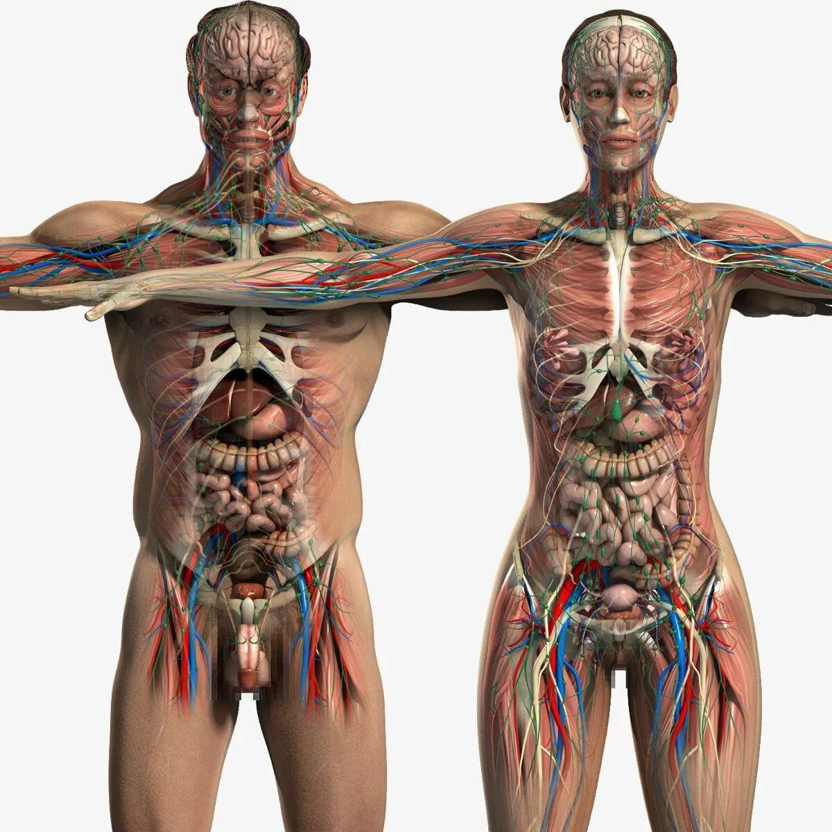 картинки органов девушки последние годы
