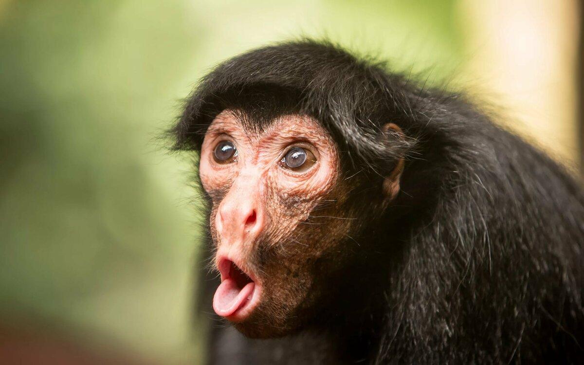 Фотки про смешных обезьян, ужас