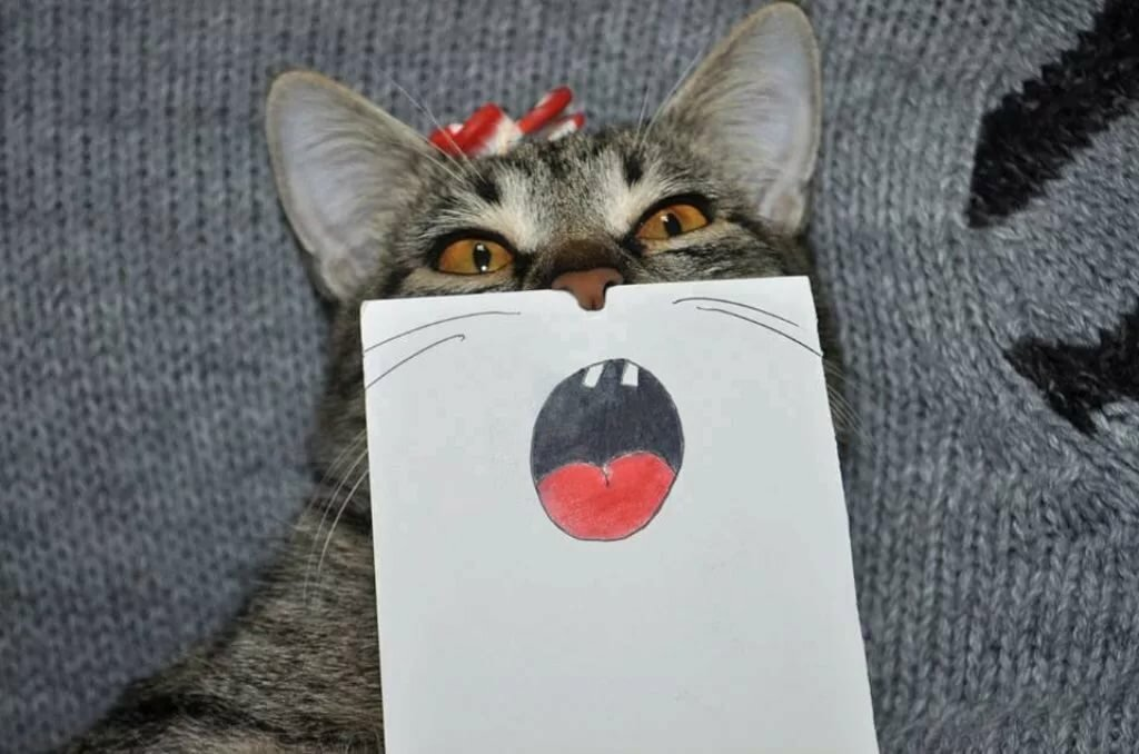 Пожелания, прикольные картинки для поднятия настроения с котами