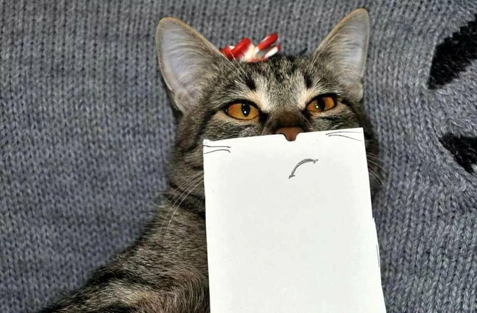 Прикол котики смешные, новым годом