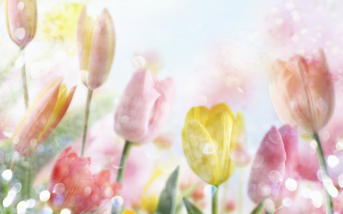 Красивые фоны для открыток весна, смешная картинка