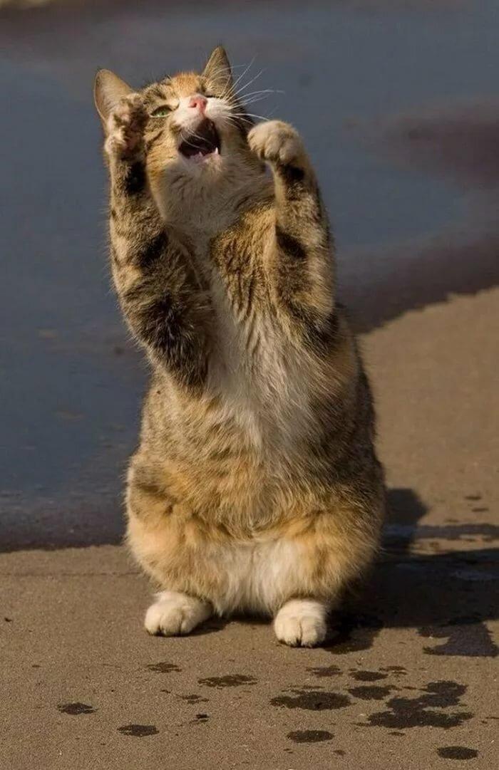 Картинки смешные коты картинки смешные коты, бдсм прикол