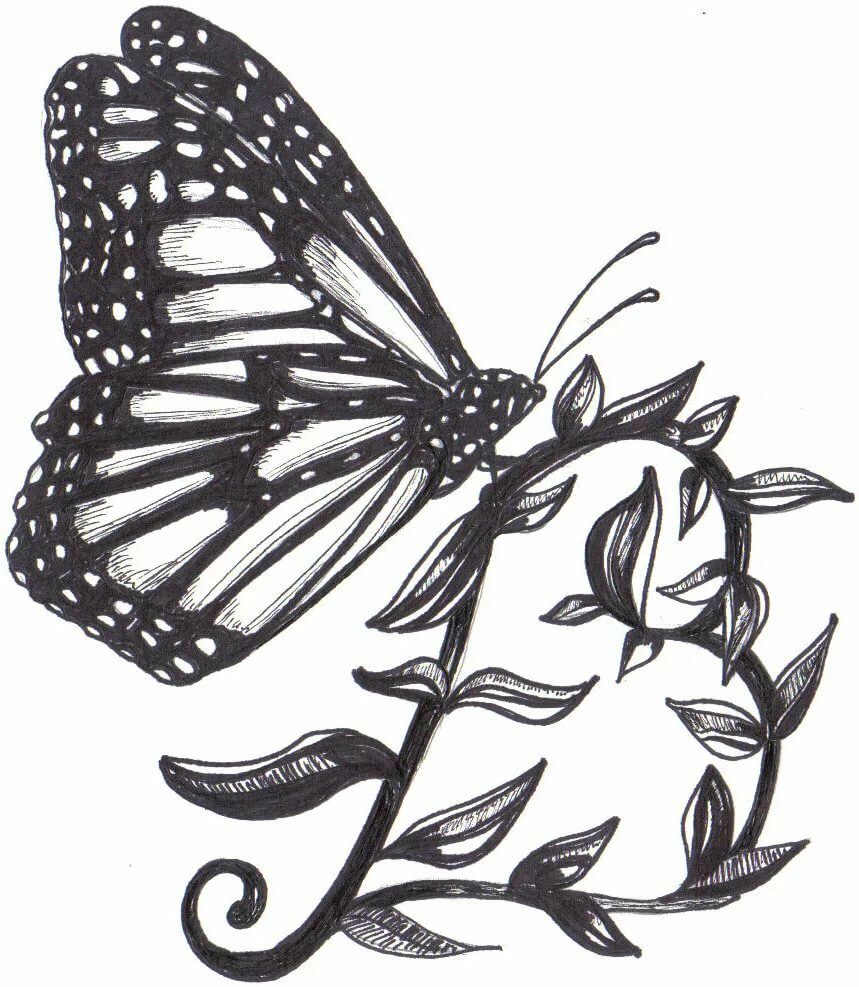 vanessa butterfly drawing images - 859×987