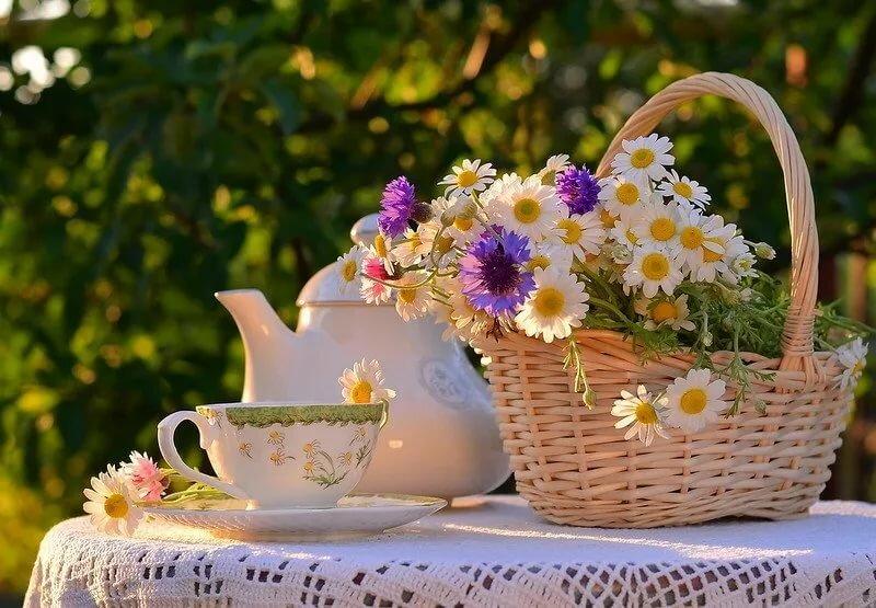 открытки с добрым утром летние и чудесным днем природа юля рассказала, что
