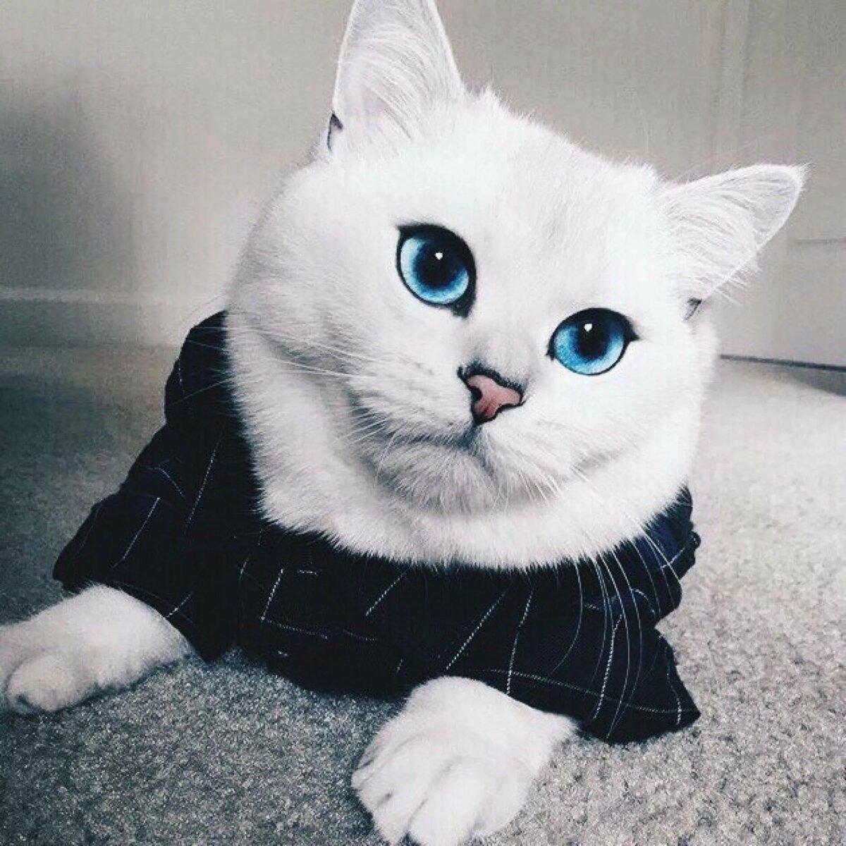 Картинки самый красивый кот на земле, веселые картинки картинки