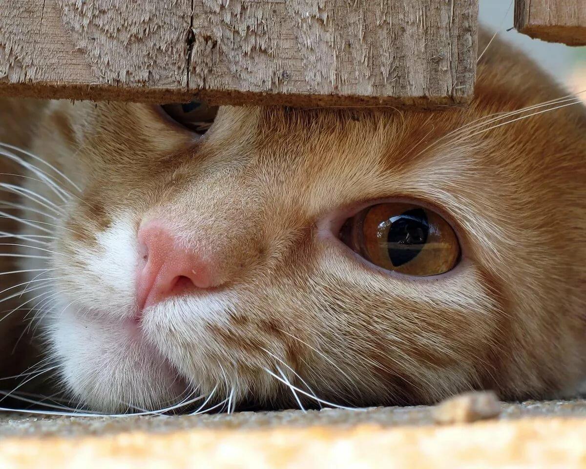 Выпускной садик, картинки по работе смешные с котиками